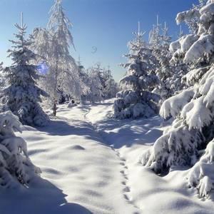 Winterwald Mit freundlicher Genehmigung Fotograf Harald Wunderlich